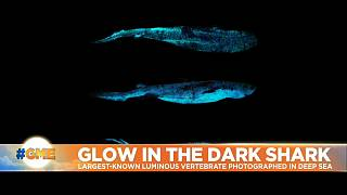 Pictures of deep sea luminous shark.
