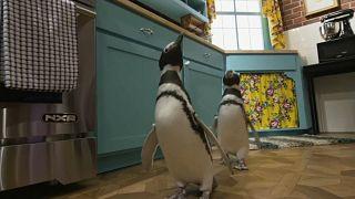 """Pingouins dans une réplique des décors de """"Friends"""""""