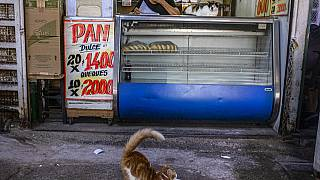 A cat stretches in front of a bakery at La Vega market in Santiago, Chile
