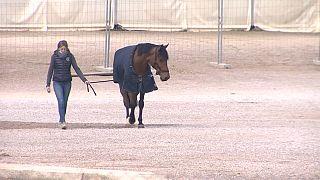 Una mujer pasea su caballo en el CES Valencia Tour