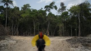 Image datant du 31 août 2019. Le chef indigène Kadjyre Kayapo regarde un chemin créé par des bûcherons dans l'État de Para, au Brésil.