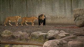 Зоопарк Копенгагена вновь открыл свои двери для посетителей