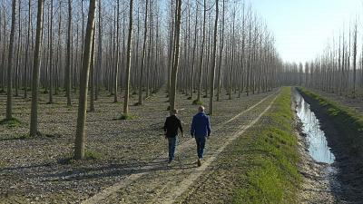 How much does planting trees help to combat climate change?