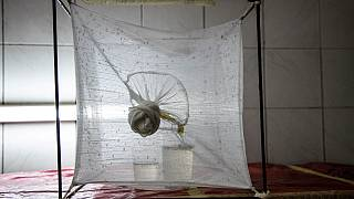 Paludisme : étude sur la modification génétique des moustiques
