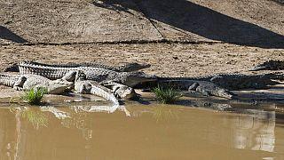Varios cocodrilos se escapan de una granja en Sudáfrica a unos 150 km de Ciudad del Cabo
