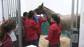 En Europe, les chevaux sous la menace d'une épidémie de rhinopneumonie