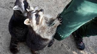 Állatkerti fotó