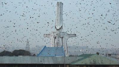 Les chauves-souris du Plateau d'Abidjan menacées