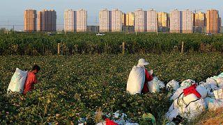 ABD, 'köle işçiliği' gerekçesiyle Çin'den pamuk ithalatı yasağını genişletmişti / Arşiv