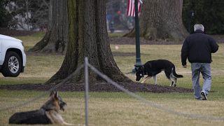Die Schäferhunde der Bidens auf dem Südrasen des Weißen Hauses, 25.01.2021