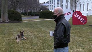 طرد كلاب جو بايدن من البيت الأبيض بعد حادث عض