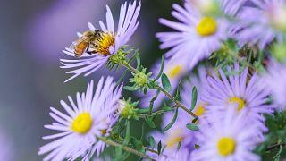 Άνοιξη - Γύρη και αλλεργίες