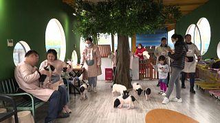 """مقهى للحيوانات المدللة """"غير الاعتيادية"""" في شنغهاي"""
