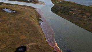 Tracce di contaminazione di carburante dopo un incidente in un impianto termico vicino Norilsk