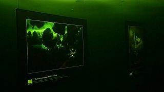 معرض فني تحت الماء أقيم تحت البحر المتجمد في روسيا