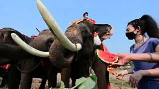People in Thailand ride elephants to mark National Elephant Day