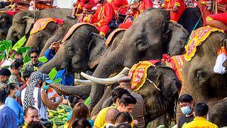 Journée nationale de l'éléphant en Thaïlande