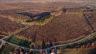Alig kilenc hektár maradt meg a Bácspalánka városát övező erdőből.