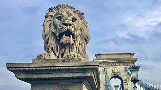 A Lánchíd egyik budai oroszlánja