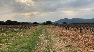 Two vineyards: two approaches to viniculture - Lirac in March 2021