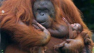 في حديقة حيوان في إندونيسيا