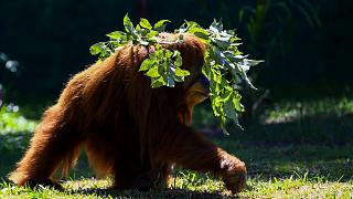 حديقة حيوانات ريو ديجانيرو البرازيل