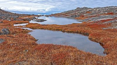 Tundra Ponds in the High Arctic near the Icefjord of Ilulissat, Greenland.