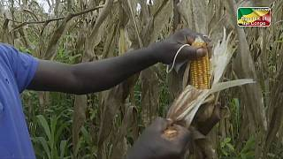 Le Congo rêve de diversification économique