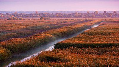 The Danube Delta runs through Romania and the Ukraine