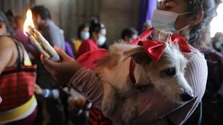 Hundreds of dogs receive the blessing of Saint Lazarus in Nicaragua