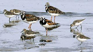 Vögel im Wasser