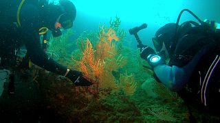 A caccia di salute nell'oceano