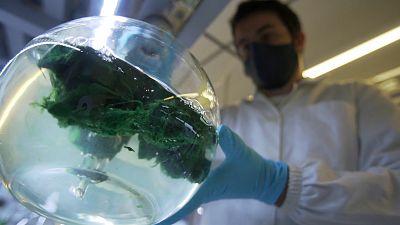 The ocean's microalgae and cyanobacteria: potential cures for disease