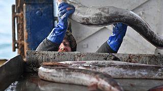 Brexit: Zwischenlösung bei Fischfangflotten