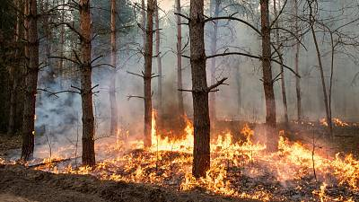 Risk of wildfires increases in the UK