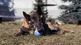 طرح اختصاص مستمری بازنشستگی برای گروهی از حیوانات در لهستان