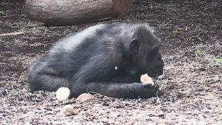 Зоопарк, Чехия