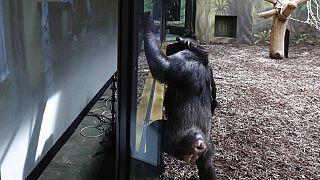 Zoomkapcsolat két állatkert között