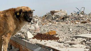 ظاهرة الكلاب الضالة في قطر