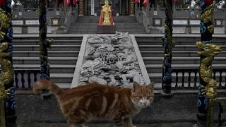 قط ينظر إلى زائري معبد في ووهان في محافظة هوباي في الصين. 2021/02/09