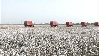 I campi di cotone dello Xiinjang