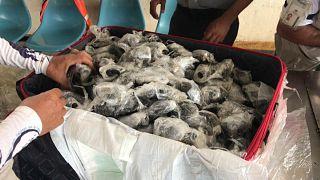 185 детёнышей галапагосской черепахи в чемодане, Аэропорт Галапагосские острова, 28 марта 2021 г.