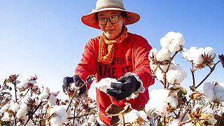 Doğu Türkistan'da pamuk toplayıcısı bir kadın