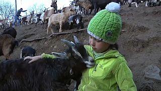 Fiammetta fra le sue capre in Trentino