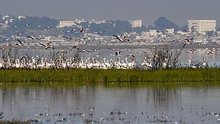 In Tunis, birds wade past waste in key Africa wetlands
