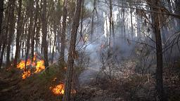 Waldbrände: Auch eine unterirdische Gefahr