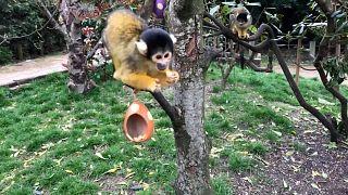 Пасхальное угощение для сурикатов и беличьих обезьянок