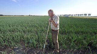 الجفاف مأزق زراعي في معظم أنحاء أوروبا