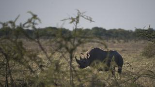 Namibia struggling to protect rhinos amid pandemic