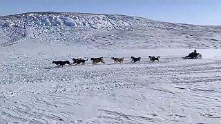 """Арктическая гонка на собачьих упряжках """"Надежда-2021"""""""
